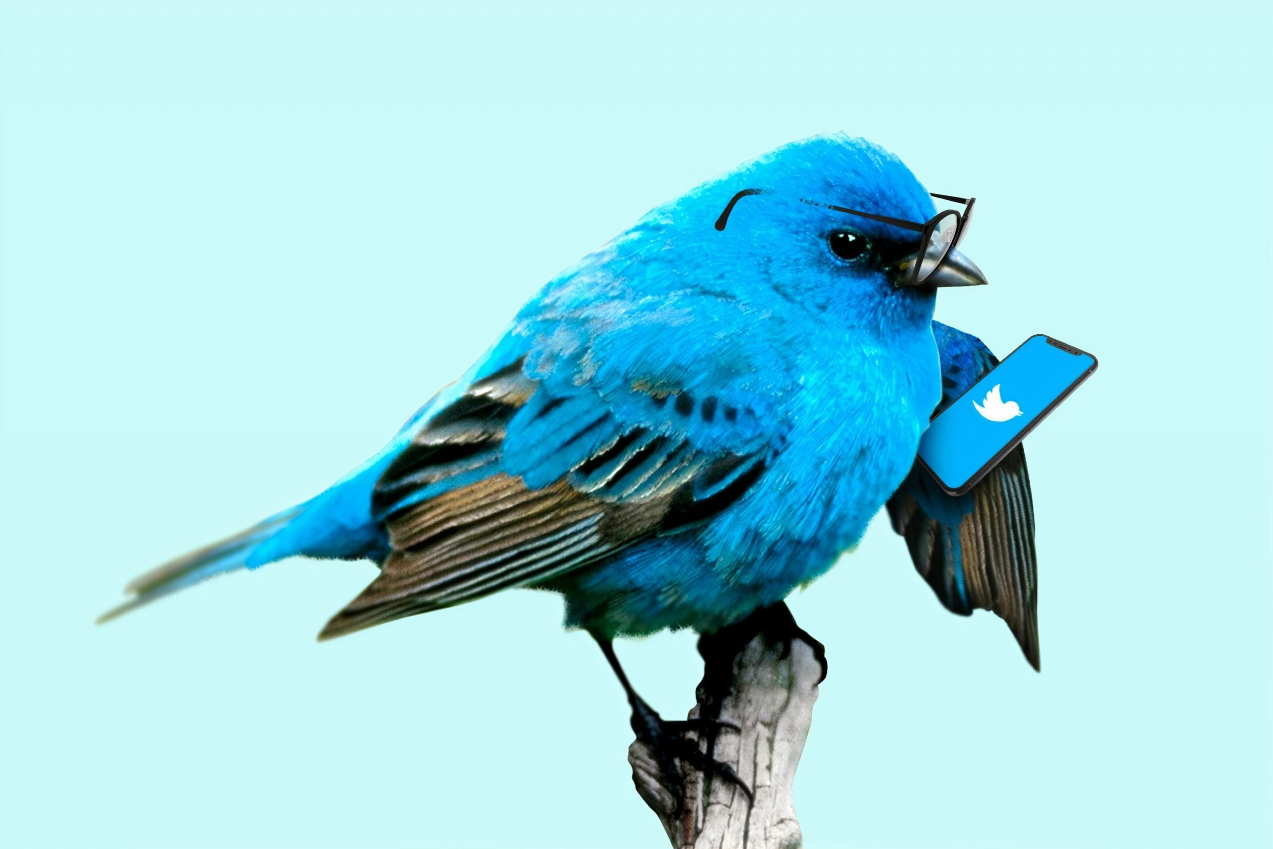 oiseau bleu tenant un téléphone