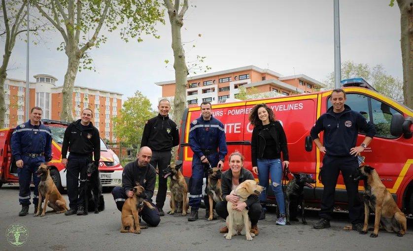 Equipe de sapeur pompier avec chiens